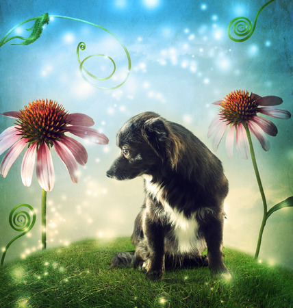 chiwawa: Black dog in a fantasy hilltop landscape with echinacea flowers
