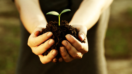 Female hand holding a young plant with soil photo
