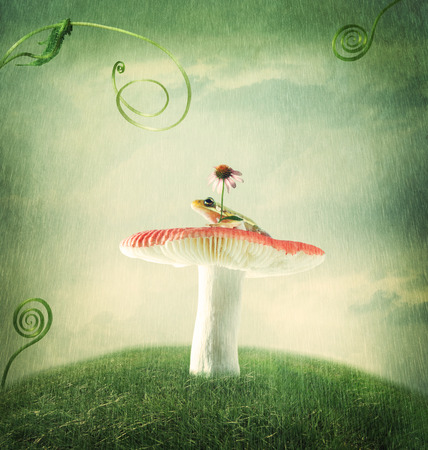 Cute little froggy on the magical mushroom Stock Photo