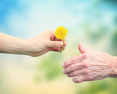 an elderly person: Senior woman sharing a flower with an elderly woman