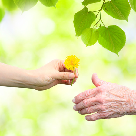 Young woman giving a dandelion to senior woman with green tree leaves Stock Photo
