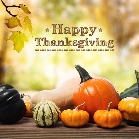 accion de gracias: Feliz mensaje de Acción de Gracias con una variedad de calabazas en los tablones de madera rústica Foto de archivo