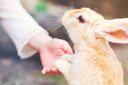 Rabbit holding hands with a senior woman Stock Photo