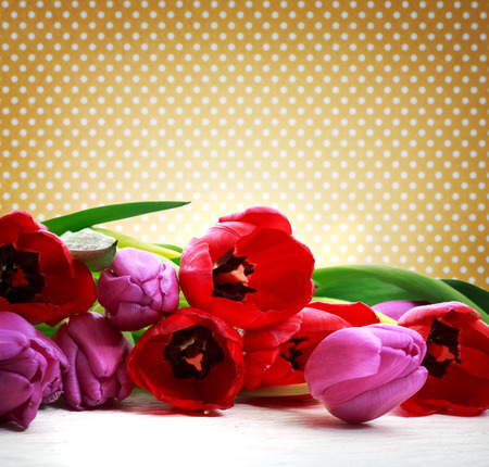 polka dots background: Red and purple tulips over polka dots background Stock Photo