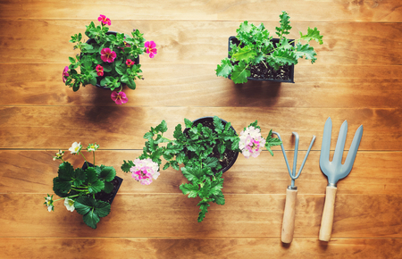 Potted plants and garden tools on a rustic wooden table