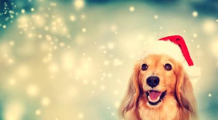 Tekkel hond draagt een kerstmuts op sneeuwachtige nacht