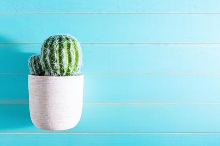 decoracion mesas: Potted cactus house plant on wooden table Foto de archivo