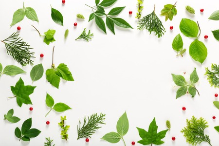 flat earth: Collection of green leaves top view flat lay Stock Photo
