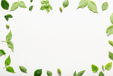 Collection of green leaves top view flat lay Stock Photo