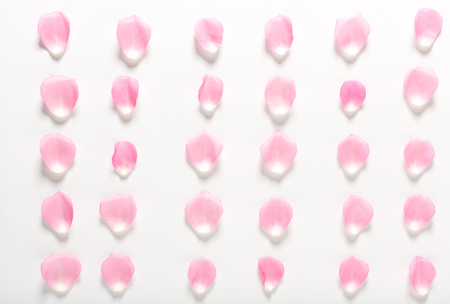 Rose petals aligned on a white background