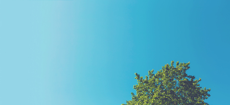 Minimalist tree top with light blue sky background