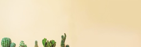 minimal: Cactus tops of many types on a muted yellow background