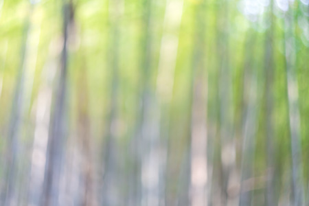 Bright blurred bamboo forest abstract bokeh background
