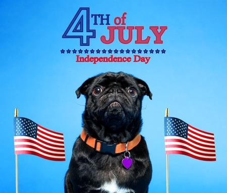 Pug nero con una bandiera americana sul quarto del luglio Archivio Fotografico - 80534365