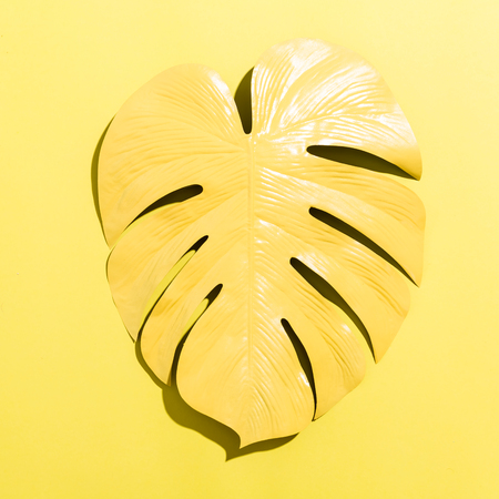 Painted tropical monstera leaf with hard shadow on a yellow background 免版税图像