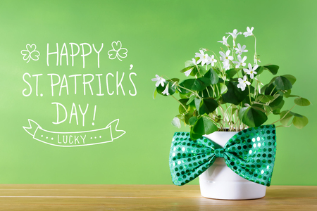 Saint Patricks Day shamrock in white pot with bowtie Stock Photo