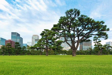 Pine trees outside the Emperors Palace in Chiyoda, Tokyo, Japan