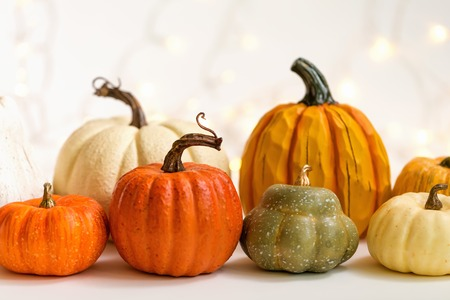 Collection of autumn pumpkins on a shiny light background
