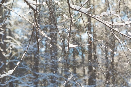 Winter forest snow abstract shinning trees background