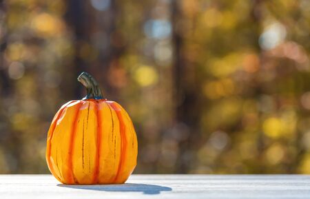 Small pumpkin outside on a fall forest background