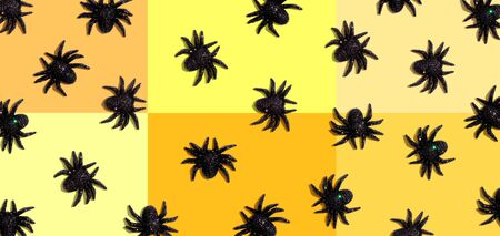 Halloween black spiders - overhead view flat lay