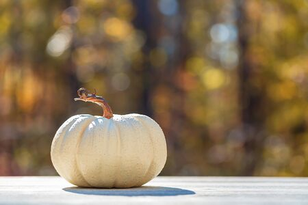 White pumpkin outside on a fall forest background Stock Photo