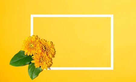 Chrysanthemum flowers from above - overhead view flat lay Stock Photo