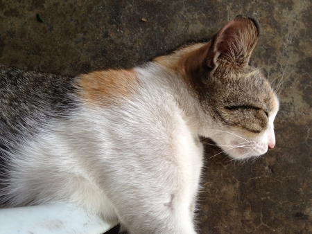 Caught a sleeping cat dozing off whole waiting to be fed.