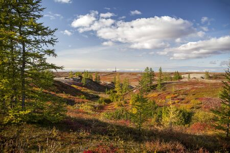 Autumn in the tundra. Yellow spruce branches in autumn colors on the moss background. Tundra, Kola peninsula, Russia.Beautiful landscape of forest-tundra, Фото со стока