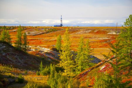 Autumn in the tundra. Yellow spruce branches in autumn colors on the moss background. Tundra, Kola peninsula, Russia.Beautiful landscape of forest-tundra, Stock Photo