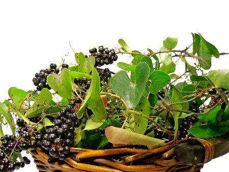Black Bryony wild fruit berries isolated on a white background in a straw basket. photo