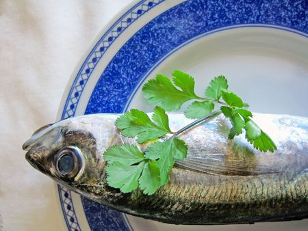 fishy: Mackerel fish on a plate with a piece of coriander herb.