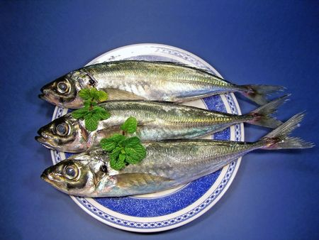 aligned: top view of three mackerel fish aligned on a blue plate with spearmint.