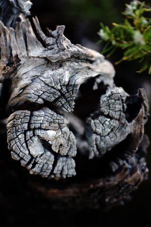 deteriorated: Closeup view of a cut section of a tree, deteriorated by the passage of time. Stock Photo