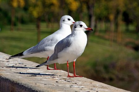 appreciating: Close view of two seagulls together on the ledge of a wall appreciating the view.