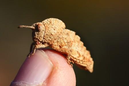 Strange grasshopper on top of a human finger. photo