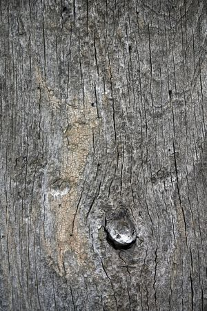 flaw: Close view of the texture of an old tree. Stock Photo