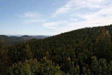 region of algarve: View of the lush forest of S.Brás de Alportel region located on the Algarve, Portugal. Stock Photo