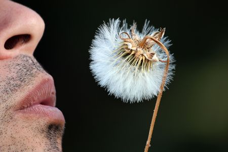 View of some lips blowing a dandelion flower.