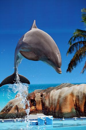View of a dolphin jumping out of the water on a waterpark. Stock Photo