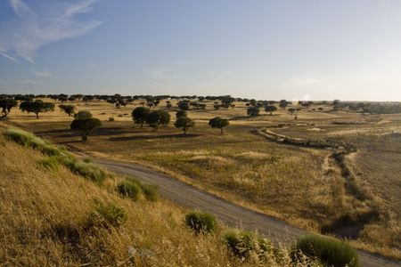 View of the typical Alentejo landscape fillled with dry grass and holm oak trees. Stock Photo - 6294795