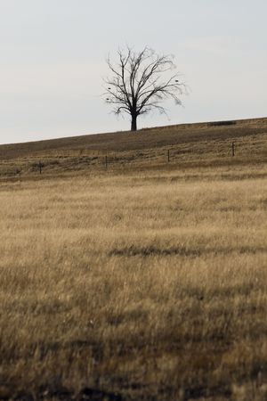 dryed: View of a hill with dry grass with a silhouetted tree on the top.
