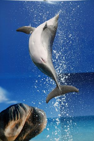 A dolphin on a waterpark makes a jump out of the pool. Stock Photo - 6305977