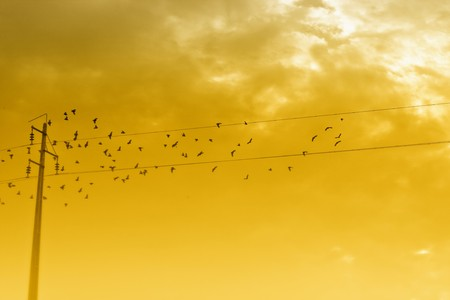 View of a flock of birds around an electrical power line. photo