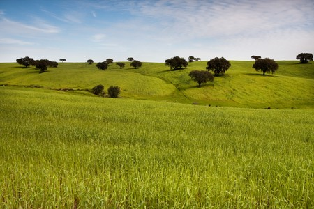 View of a beautiful green hill with scattered trees on the spring. photo