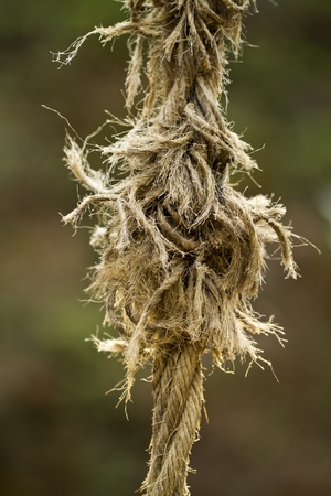 severance: Close view of an ripped old rope.