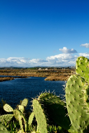 View of the beautiful marshlands in the Algarve. photo