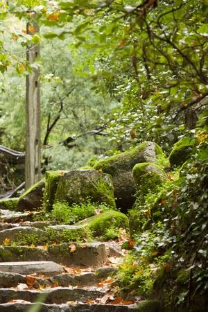 region of algarve: View of the beautiful park in Monchique region, Algarve, Portugal.