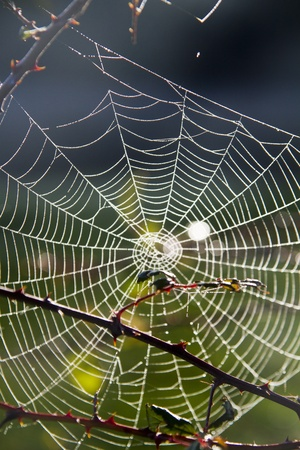 Close detail view of a beautiful spider web covered with morning dew. Stock Photo - 12210656