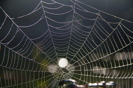 Close detail view of a beautiful spider web covered with morning dew. photo